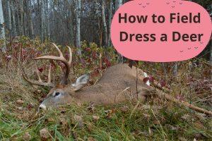How to Field Dress a Deer